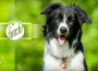 【APP开发】微软推狗脸识别App:根据照片辨别狗狗品种